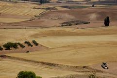 Gebieden van tarwe stock afbeelding