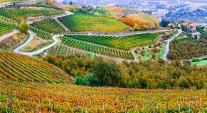 Gebieden van wijngaarden in de herfstkleuren in Piemonte Noord-Italië royalty-vrije stock foto