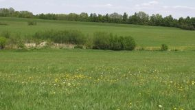 Gebieden, Vlaktes, Weiden, Weilanden, Landschappen stock videobeelden