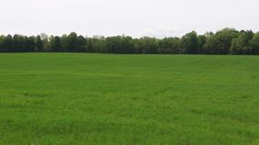 Gebieden, Vlaktes, Weiden, Weilanden, Landschappen stock video