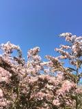 Gebieds roze bloemen, blauwe hemel royalty-vrije stock afbeeldingen
