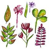 Gebiedsbloemen en bladeren watercolor Stock Foto's