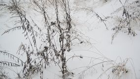 Gebiedsgras in de winter tijdens een blizzard stock video