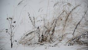 Gebiedsgras in de winter tijdens een blizzard stock footage