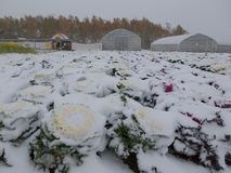 Gebiedsinstallatie met sneeuw wordt behandeld die Stock Afbeelding