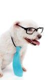 Gebildeter Hund des Geschäfts Stockfoto