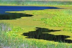 Gebirgsabfluß stellt ein Tal von Sumpfgebiet her lizenzfreie stockfotografie