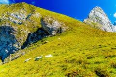 Gebirgsalpine Weiden auf den Slowenen Schafherden in den Bergen Stockfotos