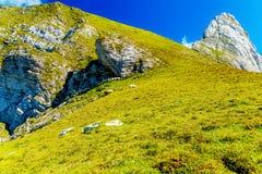 Gebirgsalpine Weiden auf den Slowenen Schafherden in den Bergen Stockfoto