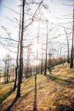 Gebirgsbäume gegen den Himmel drehend stürmisch stockfoto