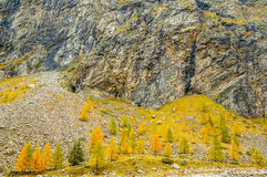 Gebirgsbäume im Herbst Lizenzfreie Stockfotografie