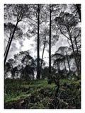 Gebirgsbäume und ein bewölkter Tag Stockfotografie