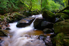Gebirgsbach im grünen Wald Stockfotografie
