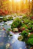 Gebirgsbach im Herbstwald in Nationalpark Triglav Stockfotografie
