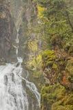 Gebirgsbach mit einem Wasserfall innerhalb des Waldes, in Ahrntal - ITALIEN stockfotografie