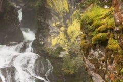 Gebirgsbach mit einem Wasserfall innerhalb des Waldes, in Ahrntal - ITALIEN stockbilder
