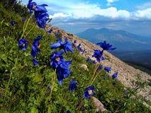 Gebirgsblumen auf der Steigung Stockfoto