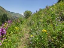Gebirgsblumen Erholungsort Issyk-Ata in Kirgisistan Stockfoto