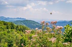 Gebirgsblumen mit einem Schmetterling Lizenzfreie Stockfotos