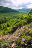 Gebirgsblumen und -tal Stockfotos