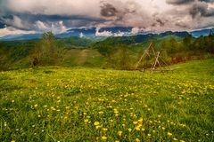 Gebirgsblumenwiese mit Berg Stockbild