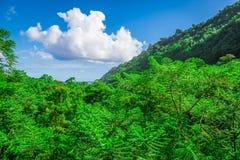 Gebirgsdschungel in Hawaii Stockfotografie
