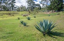 Gebirgsfeld mit Kaktuspflanzen und wilden Tieren Stockfoto