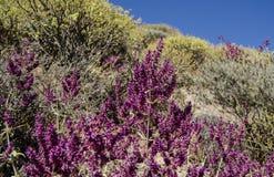 Gebirgsflora mit blauem Himmel im Hintergrund Purpurrote und gelbe Blumen stockbild