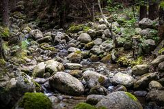 Gebirgsfluss, Ausdehnung tief im Wald lizenzfreie stockfotos