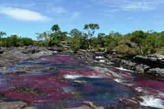 Gebirgsfluss Canio Cristales. Kolumbien stockfoto