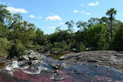 Gebirgsfluss Canio Cristales. Kolumbien lizenzfreies stockbild