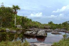 Gebirgsfluss Canio Cristales kolumbien Stockbild