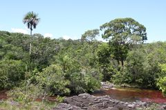 Gebirgsfluss Canio Cristales kolumbien Lizenzfreies Stockfoto