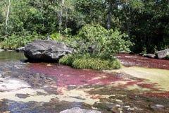 Gebirgsfluss Canio Cristales kolumbien Lizenzfreies Stockbild
