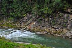 Gebirgsfluss in den Karpatenbergen Ukraine mit einem Felsen im Hintergrund und in einem dichten Wald stockfoto