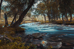 Gebirgsfluss, der unter moosigen Steinen durch den bunten Wald fließt Stockbilder