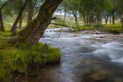 Gebirgsfluss, der unter moosigen Steinen durch den bunten Wald fließt Lizenzfreie Stockfotos