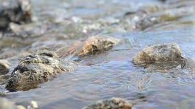 Gebirgsfluss, der zu Boden fließt stock video