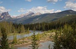 Gebirgsfluss durch die immergrünen Bäume lizenzfreie stockfotos