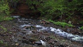 Gebirgsfluss fließt in dunkler Waldschöne Landschaft mit Bach im Wald stock video footage