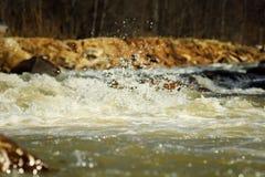 Gebirgsfluss im Frühjahr stockfotos