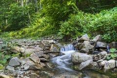 Gebirgsfluss im Karpatenwald Stockbild