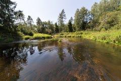 Gebirgsfluss im Sommer umgeben durch Wald Stockfoto