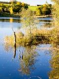 Gebirgsfluss im Sommer umgeben durch Wald Lizenzfreie Stockfotos