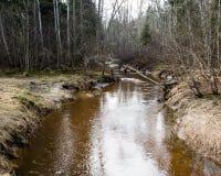 Gebirgsfluss im Sommer umgeben durch Wald Stockfotografie