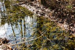 Gebirgsfluss im Sommer umgeben durch Wald Lizenzfreies Stockfoto