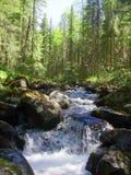 Gebirgsfluss im Wald Lizenzfreies Stockbild