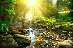 Gebirgsfluss mitten in grünem Wald Stockfotografie