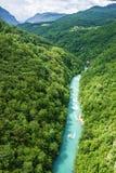 Gebirgsfluss Tara und Wald, Montenegro Stockfotos