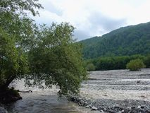 Gebirgsfluss und Wald Lizenzfreies Stockbild